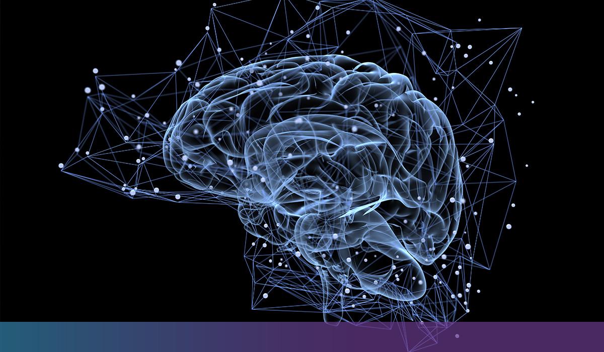 Notre Cerveau Est Plastique.