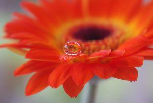 fleur-eau