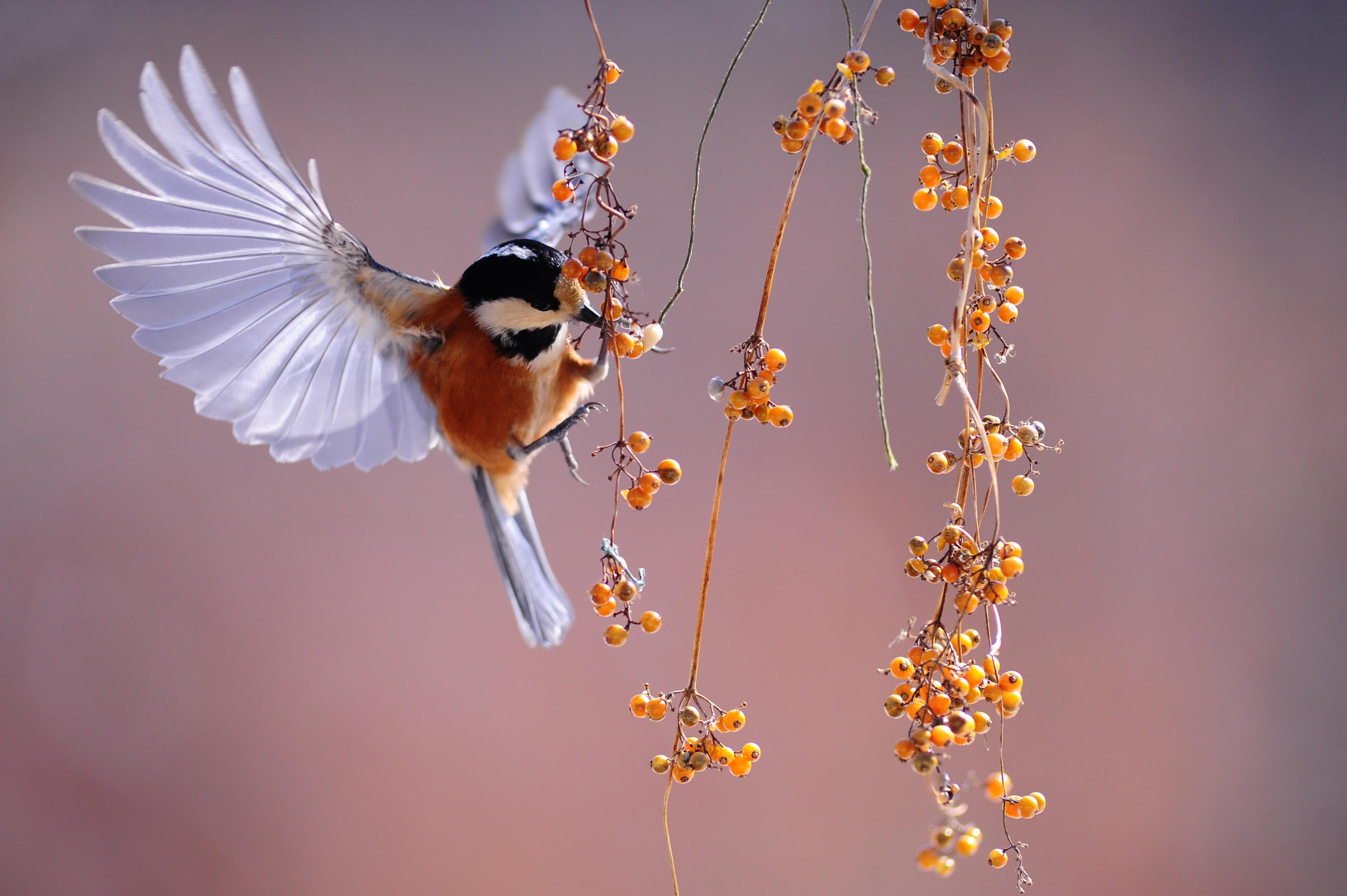 L'émerveillement - le spectacle de la nature
